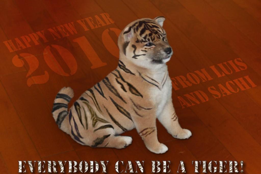 tiger shiba